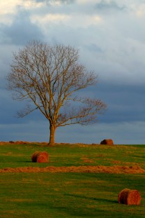 tree and bales