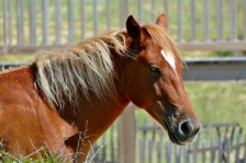 Horse4 Blondie